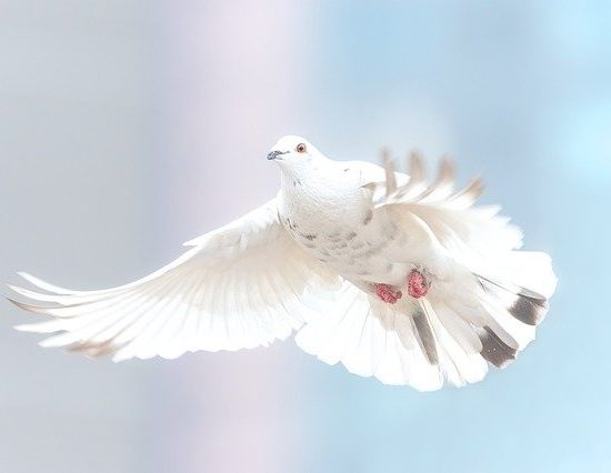 articol cathchy libertatea
