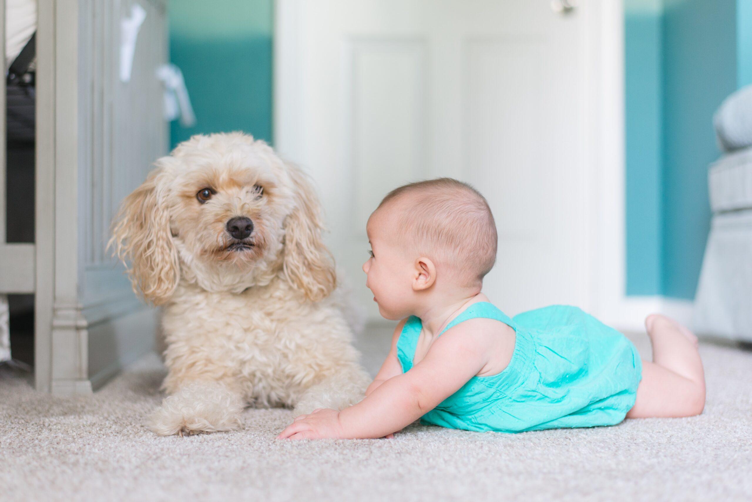 De ce este bine pentru un copil să crească alături de un animal de companie